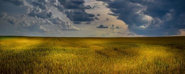 veille économique sur l'ensemble du marché ukrainien